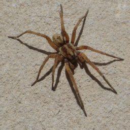Уничтожение пауков в Красноярске